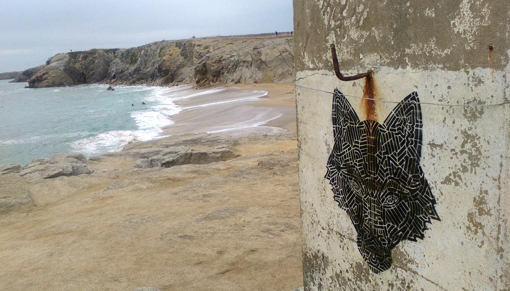 Le loup noir de port Bara - uptaken.com